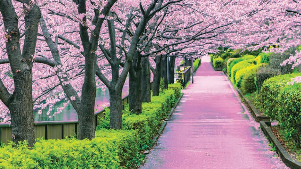 Des guides inédits sur le Japon, l'Espagne méditerranéenne et l'Arizona