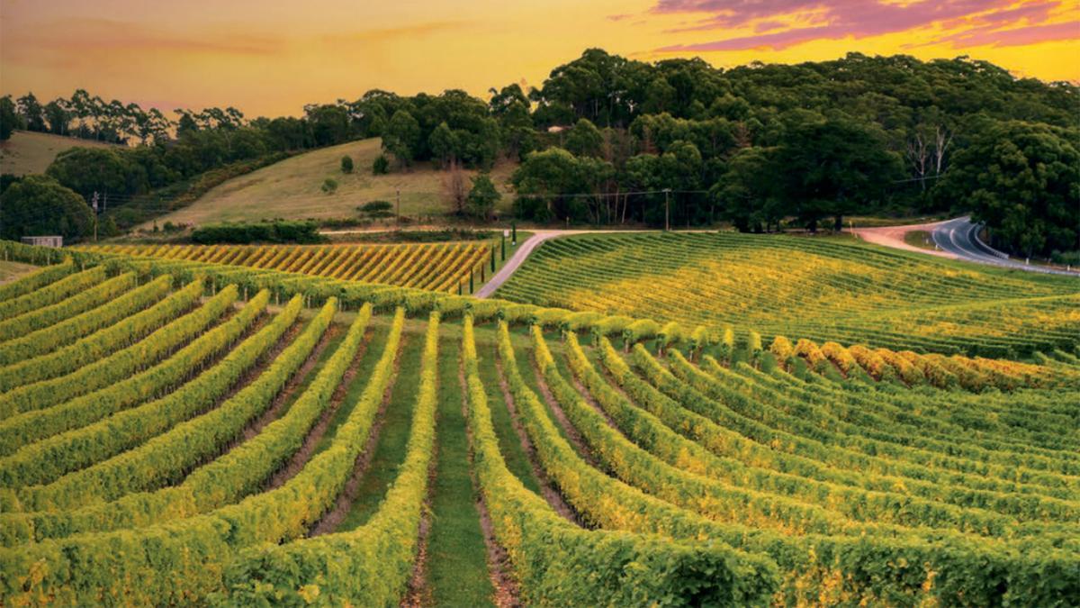 «Routes des vins dans le monde – 50 itinéraires de rêve» en librairie dès maintenant